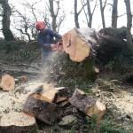 Tree Management Somerset